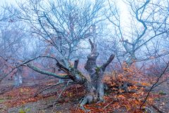 Ponuractwo krajobraz - karpa na halnym skłonie w jesieni mgle obraz stock