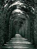 ponury avenue, Obraz Stock