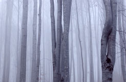 ponury bukowy las Obrazy Stock
