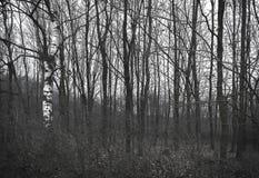 Ponury las w grayscale colours Zdjęcia Royalty Free