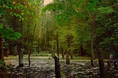 Ponury lasu krajobraz Zdjęcie Royalty Free