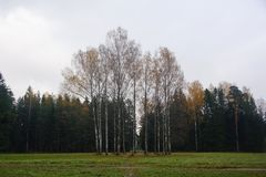 Ponury Listopadu wieczór w Pavlovsk Fotografia Royalty Free