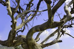 Ponury nieżywy drzewo z nieba tłem Zdjęcie Royalty Free