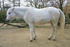 Pony 1 Stock Photo