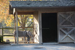 Free Pony Stock Photography - 12391682