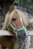 Pony. Photo is shot in a natural park in Zakynthos Island - a summer holiday destination in Greece Stock Photo