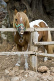 Pony. Photo is shot in a natural park in Zakynthos Island - a summer holiday destination in Greece Stock Image