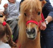 Pony. Close up of a pony Royalty Free Stock Image
