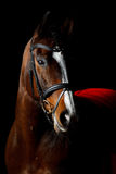Pony. Beautiful horse on black background Stock Photo