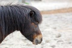 Pony. Close up of a Pony Stock Photos