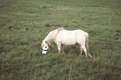 Pony Royalty Free Stock Photography