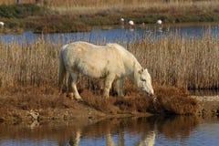 Pony Stockfotos