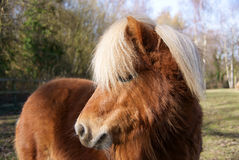 Pony 3 Royalty Free Stock Images