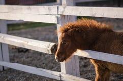 Pony stockbilder