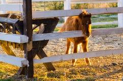 Pony lizenzfreie stockbilder