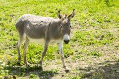 pony fotografie stock libere da diritti