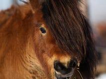pony lizenzfreie stockfotografie