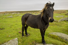 pony Stockfoto