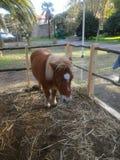 pony Stockbild