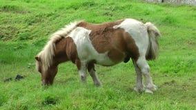 Free Pony Stock Image - 85521471