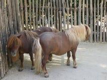 Pony allo zoo Stock Photo
