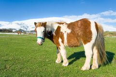 Pony in Alto Campoo Royalty Free Stock Images