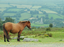 Pony auf Hügel lizenzfreies stockfoto