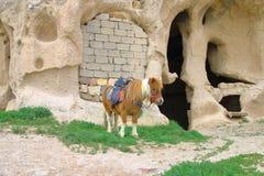 Pony ausgerüstet für das Reiten in eine Höhlenregelung lizenzfreie stockbilder