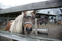 Pony behind the fence Royalty Free Stock Photography