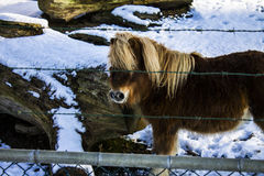 Pony behind the fence Stock Photography