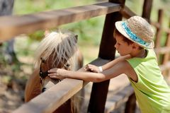 Pony and boy. At the zoo behind a wooden fence stands with white mane pony boy and stroking her hat stock photo
