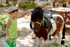 Pony and boy. Boy hat petting a beautiful colorful pony in nature Stock Photography