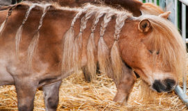 Pony with braids Stock Images