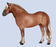 Pony breeds: Haflinger Stock Image
