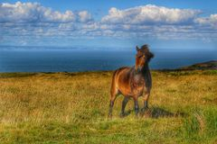 Pony on grassland on the English coast colourful edit. Edit from original, Wild Exmoor pony posing in front of the English coast, North Devon Stock Photo