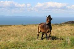 Pony, das auf der englischen Küste aufwirft Stockfotos