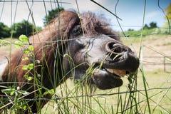 Pony, das am hohen Gras weiden lässt Lizenzfreie Stockfotografie