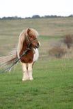 Pony in der Landseite lizenzfreie stockbilder