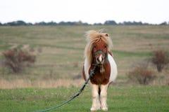 Pony in der Landseite stockfotos