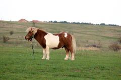 Pony in der Landseite stockfotografie