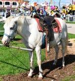 Pony an der Messe Lizenzfreie Stockbilder