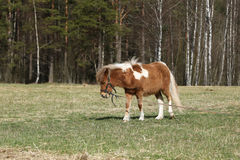 Pony in der Weide lizenzfreie stockfotos