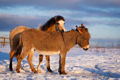 Pony and donkey Royalty Free Stock Image