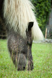 Pony eating the grass on field. Horse eating the grass on field Royalty Free Stock Photography
