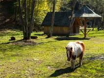 Pony on farm Stock Image