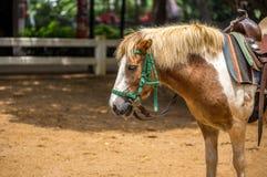 Pony in Farm or Livestock Stock Photos