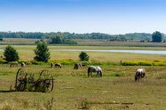 Pony farm Stock Photos