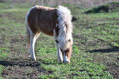 Pony on farm Stock Photo