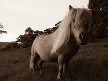 Pony in field stock photo