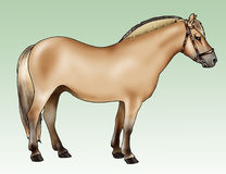 Pony - Fjord breed. Illustration of a pony - Fjord breed - Realistic style stock illustration